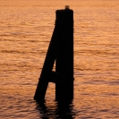 Pilings in the Hudson River